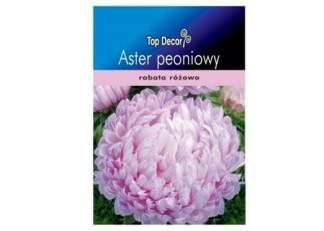 Aster peoniowy Bright Rose