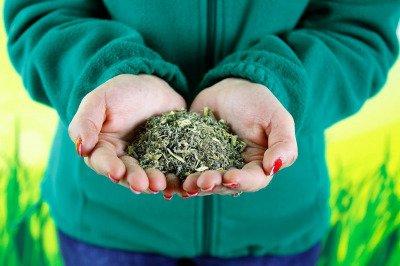 Piołun suszony 200 g - naturalny środek do eko oprysków na pchełkę ziemną, gąsienice motyla, mszyce