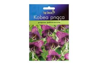 Kobea pnąca Violet Blue Top Decor