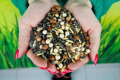 Mieszanka poplonowa strączkowo-zbożowa, nasiona na poplon 5 kg