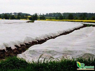 Polska agrowłóknina wiosenna biała 13,65x100m (19g) Wzmacniane Brzegi