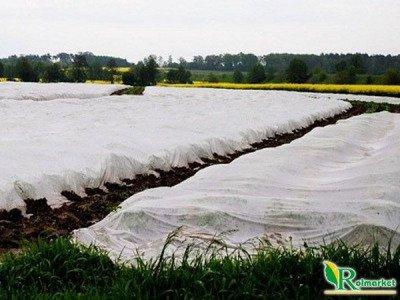Polska agrowłóknina wiosenna biała 6,35x250m (19g) Wzmacniane Brzegi